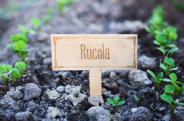 Vanerinen Rucola-kyltti ulkona kasvimaalla.